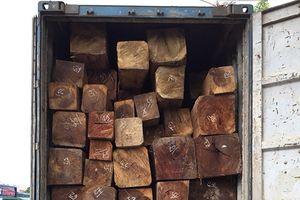 Gia Lai: Liên quan đến gỗ lậu một phó giám đốc doanh nghiệp bị bắt tạm giam