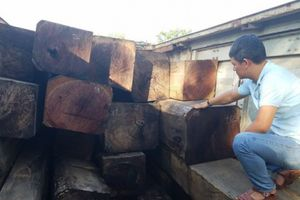 Gia Lai: Phát hiện vụ vận chuyển gỗ lậu số lượng lớn