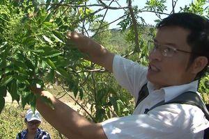 Ước vọng từ tiến sĩ Dược học để người Việt có lá gan khỏe mạnh