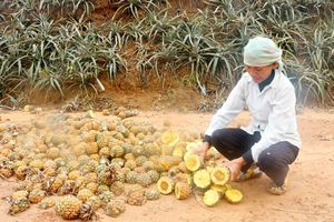 Lào Cai: Buộc doanh nghiệp bồi thường cho các hộ dân có hoa màu bị thiệt hại tại xã Bản Lầu