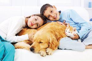 Nói chuyện với trẻ về cái chết của thú cưng
