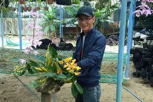 Ngưỡng mộ vườn lan rừng lớn nhất xứ Quảng, vừa chơi lại có thu nhập
