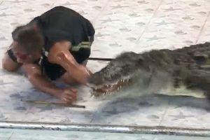 Tai nạn đẫm máu trong buổi biểu diễn với cá sấu tại Thái Lan