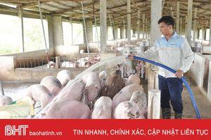 Giá lợn hơi tăng kỷ lục, thương lái khó 'săn' hàng!