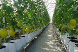 Đầu tư vào nông nghiệp, vì sao doanh nghiệp nào cũng 'ngán'?