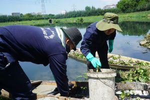 Cá chết hàng loạt ở hồ điều tiết Hòa Xuân