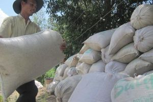 Công bố giá thành sản xuất lúa ở ĐBSCL: Nông dân tốn thêm 1.400 tỷ