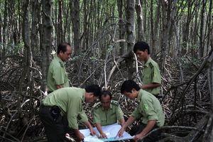 Kiểm lâm rừng ngập mặn yêu nghề, bám rừng