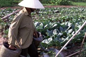 Kỳ vọng mô hình PPP ngành nông nghiệp