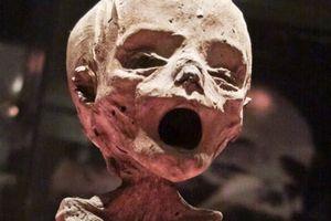 Cảnh tượng khủng khiếp trong bảo tàng xác ướp