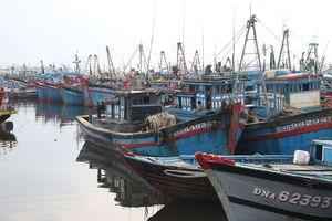 Ngư dân sợ âu thuyền: Âu thuyền vướng... khu đô thị