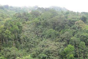 Huyền bí những cánh rừng thuốc nguyên sinh của người Cadong