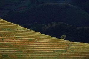 Mù Cang Chải lọt top ảnh du lịch đẹp nhất thế giới