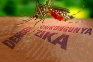 Chủ động phòng, chống dịch bệnh do virus Zika