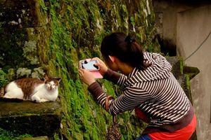 Ngôi làng của những chú mèo đáng yêu ở Đài Loan
