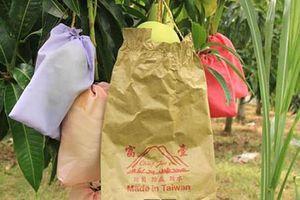 Dùng túi để bọc trái cây: Cần có cơ quan kiểm soát chất lượng