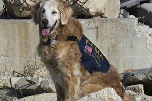 Chào vĩnh biệt rồi giết con chó có công lớn vụ khủng bố 11/9