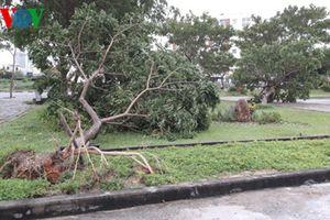 Bão số 4 khiến cây đổ ngổn ngang ở TP Đà Nẵng, 1 ngư dân mất tích