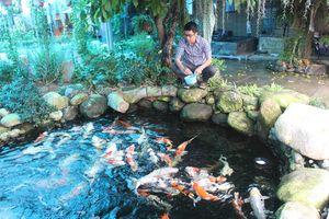 'Rẽ trái' sang làm nông: Bác sĩ mê cá koi