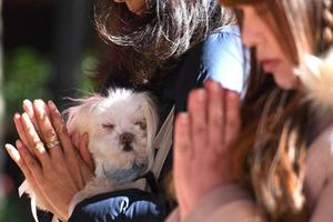 Ngôi đền giúp cầu phúc cho các loại vật nuôi