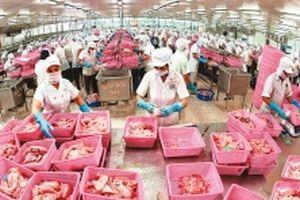 Phát triển bền vững ngành nuôi, chế biến cá tra (Tiếp theo và hết) (*)