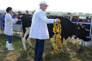 Việt Nam phát triển giống bò sữa cao sản tốt nhất