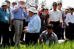 Sản xuất lúa gạo theo chuẩn quốc tế nâng vị thế gạo Việt Nam