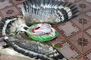Công an đang xác minh hình ảnh chim quý bị 2 anh em 'Tam Mao' làm thịt