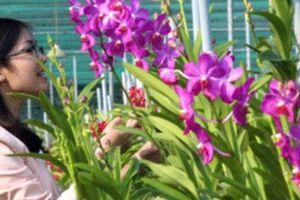 Vườn hoa lan tiền tỷ của người phụ nữ 'thép' giữa Sài Gòn