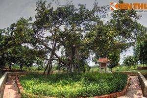 Thăm cây đa Bác Hồ trồng ở quê hương TBT Nguyễn Phú Trọng