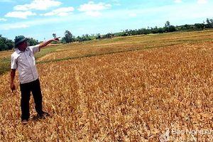 Nghệ An: Chuyển đổi hơn 2.400 ha đất lúa kém hiệu quả sang trồng màu