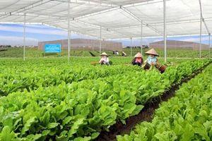 Việt Nam lỡ nhiều cơ hội xuất khẩu lớn vì mất an toàn thực phẩm
