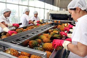 Xuất khẩu trái cây: Cẩn thận không thừa