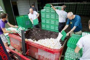 Châu Âu rúng động về vụ bê bối 'trứng bẩn'