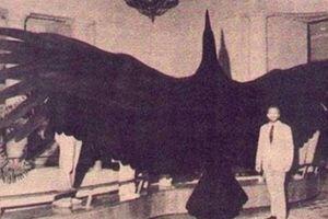 Khám phá những kỷ lục 'khủng' nhất lịch sử loài người
