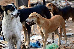Các quy định khắt khe về quản lý thú cưng trên thế giới