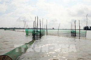 Đồng bằng sông Cửu Long mùa nước nổi - Bài 3: Sẽ không còn mùa lũ 'đẹp'