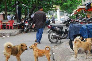 Dân TP.HCM mất hơn 26 tỉ/năm do chó cắn