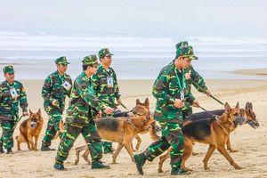 Chó nghiệp vụ tham gia bảo vệ APEC ở Đà Nẵng