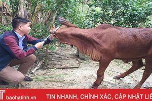 Hơn 160 gia súc tại 4 huyện 'dính' bệnh lở mồm long móng