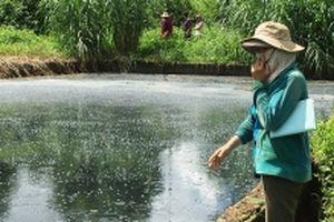 Sớm xử lý tình trạng ô nhiễm môi trường do chế biến mủ cao-su