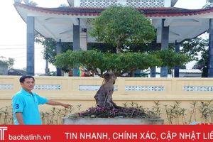 Dân hiến cây cảnh quý làm đẹp trụ sở xã, hội quán thôn