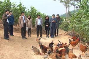 Phát triển giống vật nuôi, cây trồng bản địa