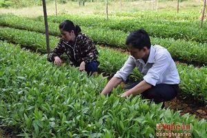 Đảm bảo an toàn môi trường và xã hội trong các doanh nghiệp lâm nghiệp