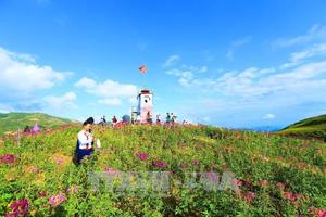 Đèo Pha Đin - điểm đến hấp dẫn du khách