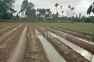 Quảng Nam- Đà Nẵng: Người dân khốn đốn vì rau củ tan hoang…