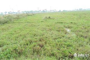 Hà Tĩnh: Trồng lúa cả vụ không mua được 3 bát phở, dân đua nhau trả ruộng