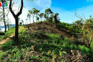 Xử phạt 100 triệu đồng đối với vụ phá rừng đặc dụng Mường Phăng