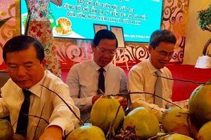 Bến Tre công bố chỉ dẫn địa lý dừa uống nước xiêm xanh và bưởi da xanh