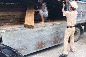 Bắt giữ xe ngụy trang vải bông chở gỗ pơ mu lậu